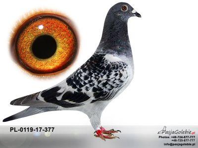 PL-0119-17-377
