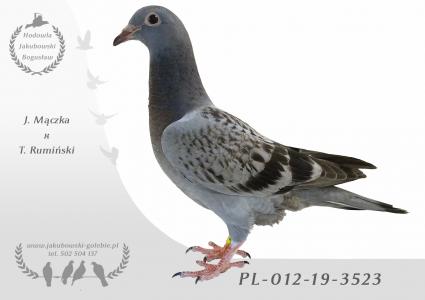 PL-012-19-3523