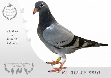 PL-012-19-3550