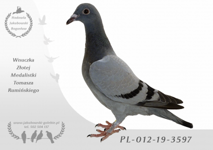 PL-012-19-3597