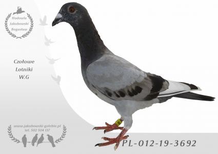 PL-012-19-3692