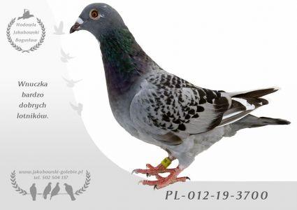PL-012-19-3700