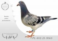 PL-012-21-9163