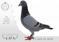PL-012-21-9176