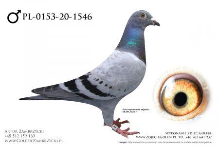 PL-0153-20-1546 - prawdopodobnie samczyk