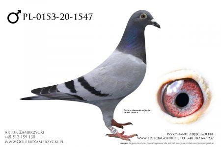 PL-0153-20-1547 - prawdopodobnie samiczka