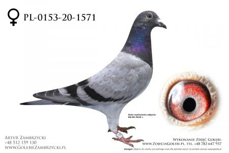 PL-0153-20-1571 - prawdopodobnie samiczka