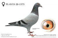 PL-0153-20-1575 - prawdopodobnie samiczka