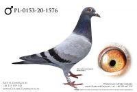 PL-0153-20-1576 - prawdopodobnie samczyk