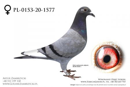 PL-0153-20-1577 - prawdopodobnie samiczka