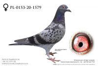 PL-0153-20-1579 - prawdopodobnie samiczka