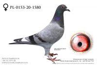 PL-0153-20-1580 - prawdopodobnie samiczka