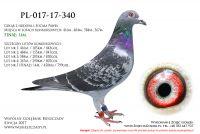 PL-017-17-340