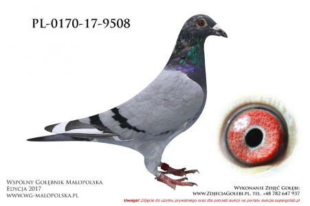 PL-0170-17-9508