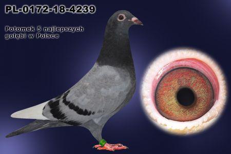 PL-0172-18-4239