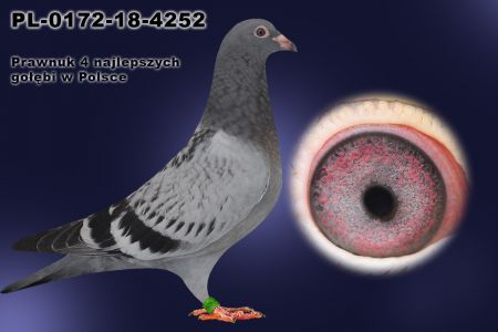 PL-0172-18-4252