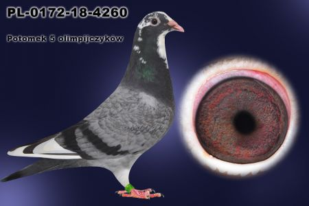 PL-0172-18-4260