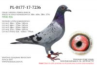 PL-0177-17-7236
