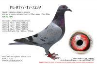 PL-0177-17-7239