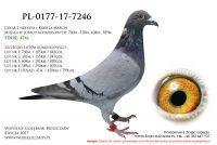 PL-0177-17-7246