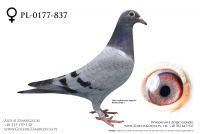 PL-0177-20-837 - prawdopodobnie samiczka