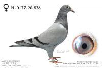 PL-0177-20-838 - prawdopodobnie samiczka