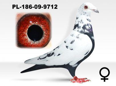 PL-0186-09-9712