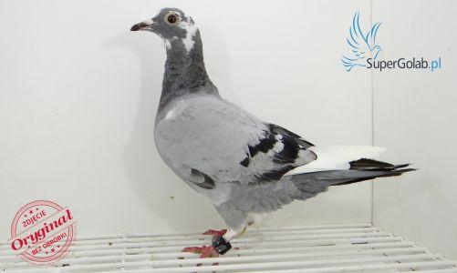 PL-0190-19-5121