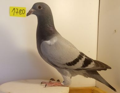 PL-0190-21-1780