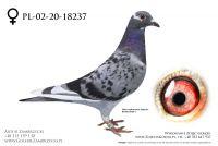 PL-02-20-18237 - prawdopodobnie samiczka