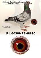 PL-0208-20-8910