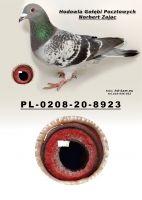 PL-0208-20-8923