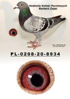 PL-0208-20-8934