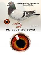 PL-0208-20-8942