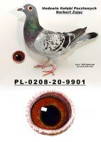 PL-0208-20-9901