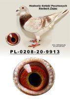 PL-0208-20-9913