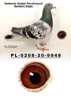 PL-0208-20-9915