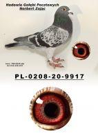 PL-0208-20-9917