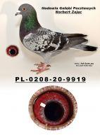 PL-0208-20-9919