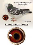 PL-0208-20-9923