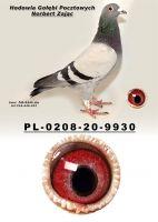 PL-0208-20-9930