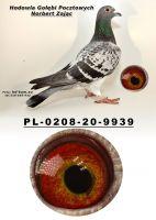 PL-0208-20-9939