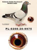 PL-0208-20-9975