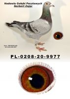 PL-0208-20-9977