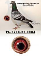 PL-0208-20-9984
