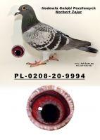 PL-0208-20-9994