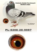PL-0208-20-9997