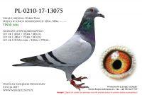 PL-0210-17-13075