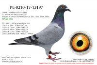 PL-0210-17-13197