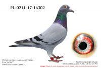 PL-0211-17-16302